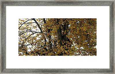 Fall Leaves Panorama Framed Print by Mary Gaines