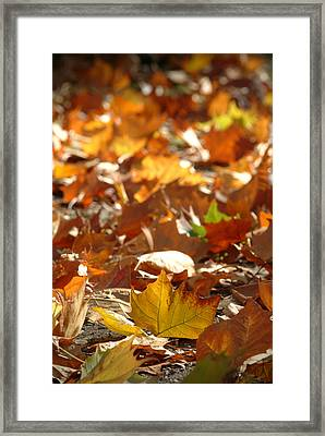 Fall Leaves Framed Print by Ron Schwager