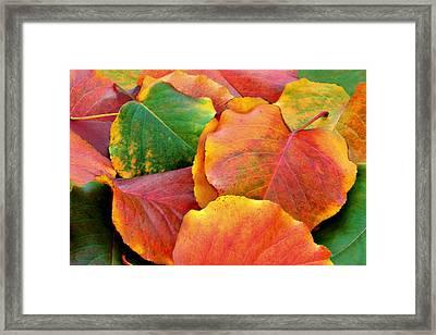 Fall Leaves Framed Print by Sheila Kay McIntyre