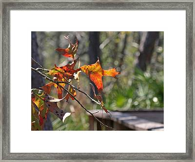 Framed Print featuring the photograph Fall by Lou Belcher