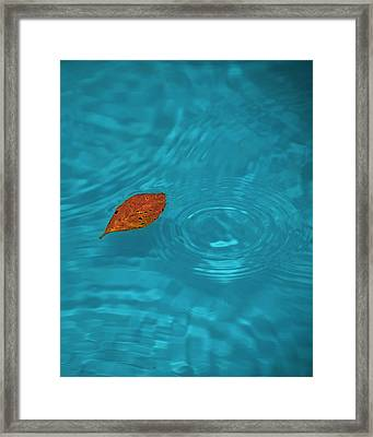 Fall... Framed Print