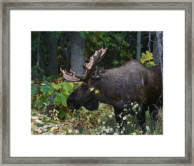 Framed Print featuring the photograph Fall Master by Doug Lloyd