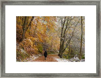 Fall Meets Winter - Walking In The Forest Framed Print by Matthias Hauser
