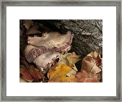 Fall Mushrooms Framed Print by Wilma  Birdwell
