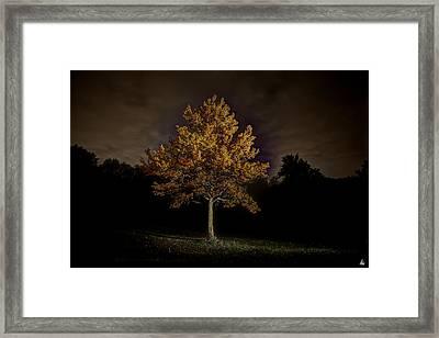 Fall Tree Framed Print by Nicholas  Grunas
