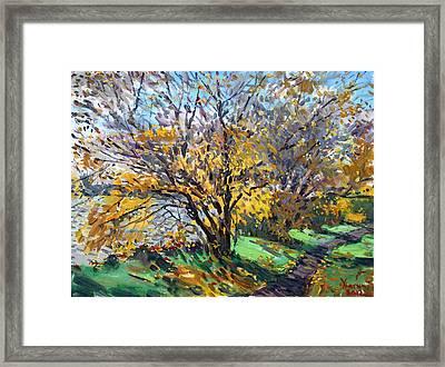 Fall Of Leaves Framed Print by Ylli Haruni