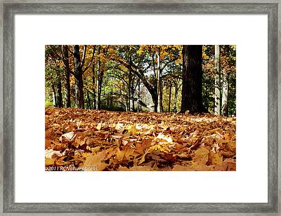 Framed Print featuring the photograph Fall On The Ground by Rachel Cohen