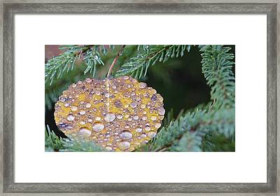 Fall Ornament Framed Print by Shirley Mailloux