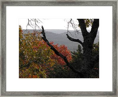 Fall Picture In Texas Framed Print by Rebecca Cearley