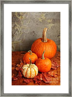 Framed Print featuring the photograph Fall Pumpkin And Decorative Squash by Verena Matthew