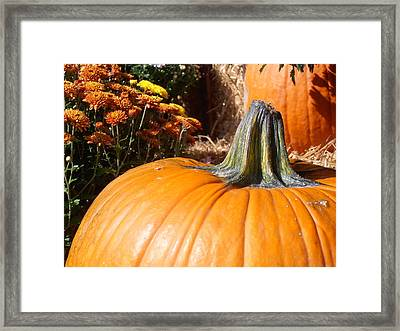 Fall Pumpkin Framed Print