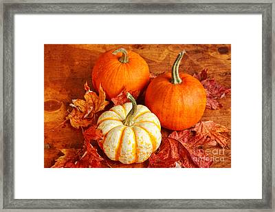 Framed Print featuring the photograph Fall Pumpkins And Decorative Squash by Verena Matthew