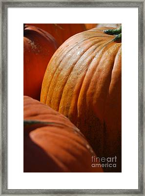 Fall Pumpkins Framed Print