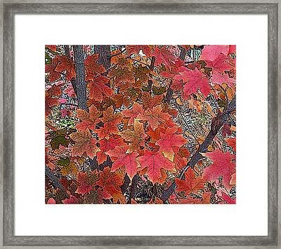 Fall Red Framed Print by David Pantuso