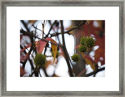 Framed Print featuring the photograph Fall Seeds by Lisa Missenda