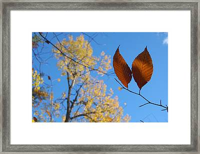 Fall Sky Framed Print