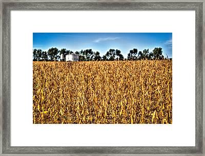 Fall Soy Field Framed Print by Dan Crosby