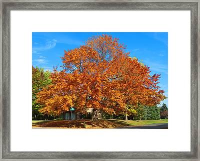 Fall Splender Framed Print by George Hawkins