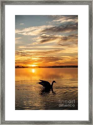 Fall Sunrise Framed Print by Iris Greenwell