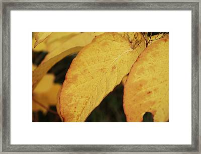 Fall Sunshine Framed Print by Terrie Taylor