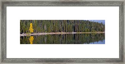 Fall Tree On Elk Lake Framed Print by Twenty Two North Photography