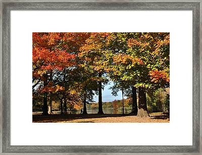 Framed Print featuring the photograph Fall Trees And Lake by Diane Lent