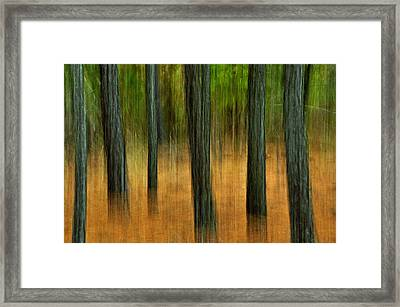 Fall Trees Framed Print by Tamera James