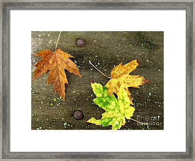 Fall Trio Framed Print by Marilyn Smith