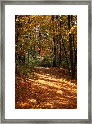 Fall Woods Framed Print by Kevin Schrader