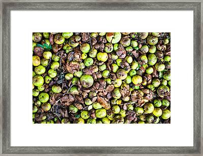 Fallen Apples Framed Print by Tom Gowanlock