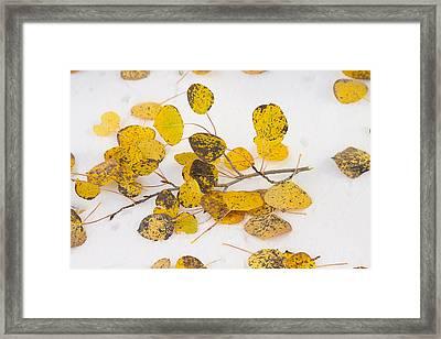 Fallen Autumn Aspen Leaves Framed Print by James BO  Insogna