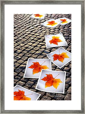 Fallen Autumn  Prints Framed Print
