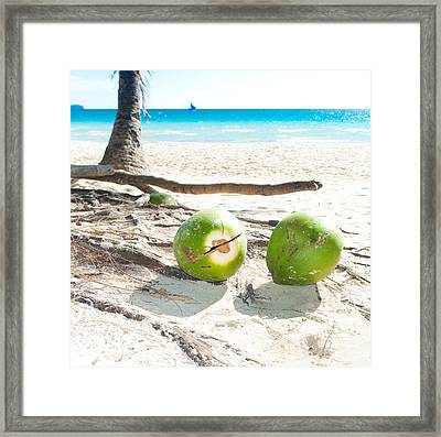 Fallen Coconuts Framed Print by Hans Engbers
