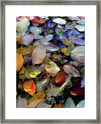 Fallen Leaves Framed Print by Don Wright