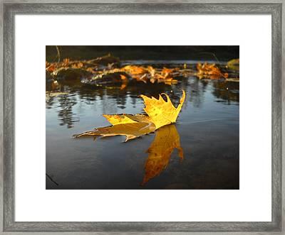 Fallen Maple Leaf Reflection Framed Print