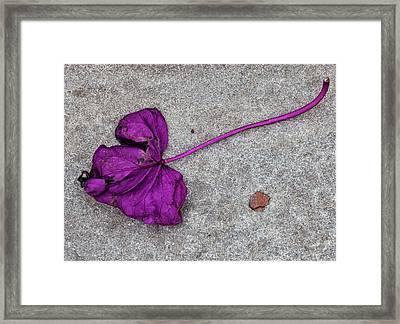 Fallen Purple Leaf Framed Print