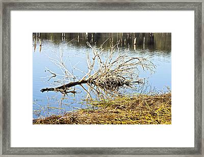 Fallen Tree Framed Print by Douglas Barnard
