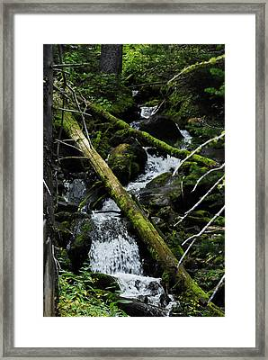 Fallen Tree Falls Framed Print by Arlyn Petrie