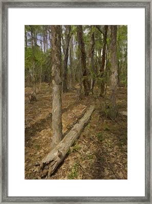 Fallen Tree In Forest Framed Print by M K  Miller