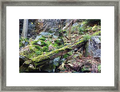 Fallen Tree Framed Print by Michal Boubin