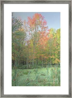 Fallin The Swamp Framed Print by Robert Pearson