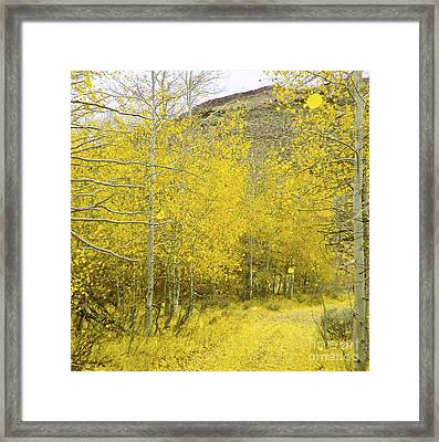 Falling Aspen Leaves Framed Print