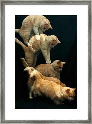 Falling Cat Framed Print by Micael  Carlsson