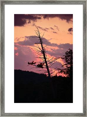 Falling Into The Sunset Framed Print by Mandi Howard