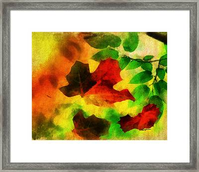 Falling Leaves Framed Print by Anthony Caruso