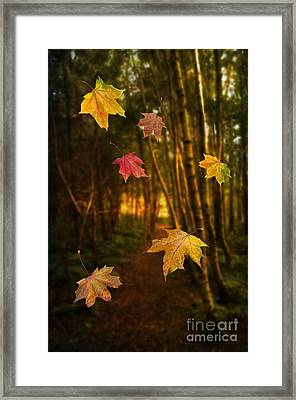 Falling Leaves Framed Print by Amanda Elwell