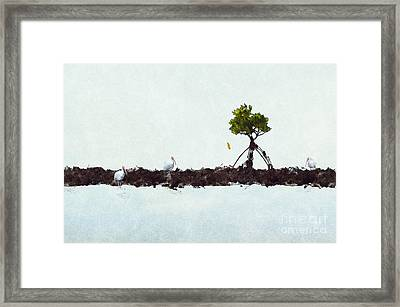 Falling Mangrove Leaf Framed Print by Dan Friend