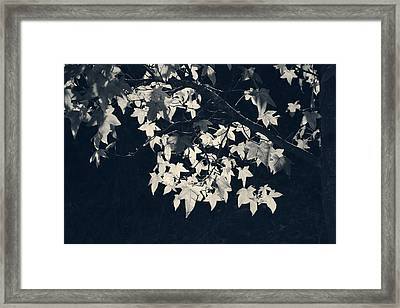 Falling Stars Framed Print by Laurie Search