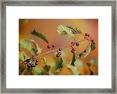 Fall's Ablaze Framed Print