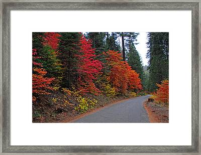 Framed Print featuring the photograph Fall's Splendor by Lynn Bauer